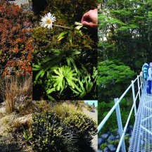Some of the flora found in the area.