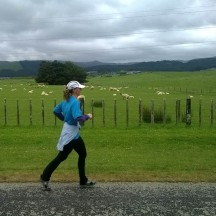 What would a New Zealand country run be without a flock of sheep in the distance?