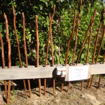Walking sticks for sale at Madsen's Camp.