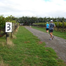 Meandering through the wine farms.