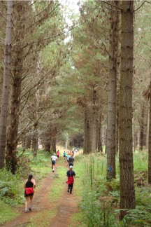 A lovely run in a pine forest.