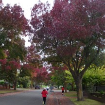 Lovely autumn colours on the trees.