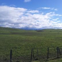 Rolling green hills in the countryside. [Photo © Johann van der Merwe]