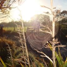 Early morning wonderland.