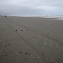 The perfectly straight, perfectly flat beach between Foxton and Himatangi.