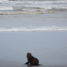A baby seal came to greet us.