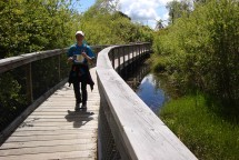 Crossing a wetland area.