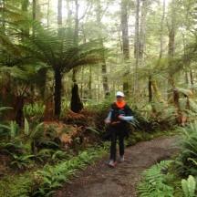 The lush green surroundings in the still flattish section next to Lake Te Anau.