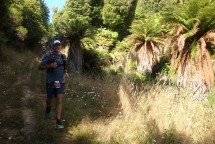 Beautiful tree ferns lining the track.