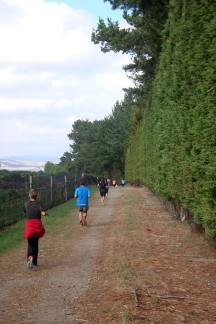 Running around the vineyards next to shelter belts.