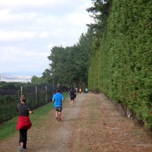 Running around the vineyards next to shelter belts.