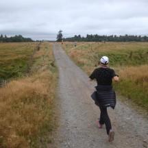 A short stretch of farm road.