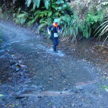 Speeding through the stream to limit the time spent in the chilly water.