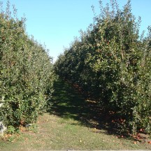 Apple orchards all along the route.