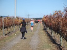 Running through the autumn vineyards provided a nice change of scenery.