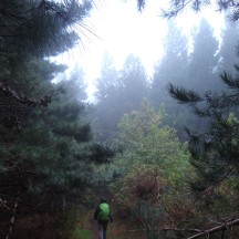 Up, up, up, into the mist.