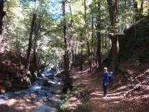 Beautiful tree-lined stream.