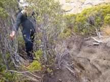 Avoiding the deep, slippery, eroded path resulted in some bush bashing.