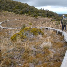 To avoid erosion and the native plants being trampled, another neatly laid out section of the path goes through the tarn.