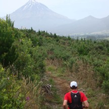 Gerry making his way through the young pine forest with Mt Taranaki up ahead.