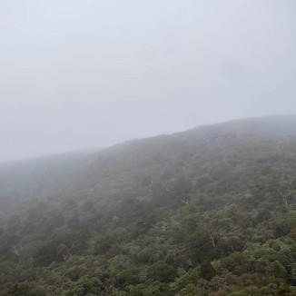 Pouakai Hut only just visible in the mist.