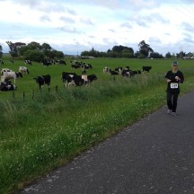 A typical NZ country scene.