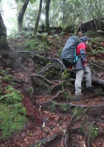 Tough going over the tree roots which lines the path.