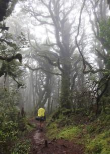 Shrouded in mist.