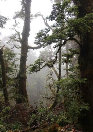 As we got higher, the mist got thicker.