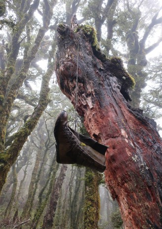 Unusual tree decoration.