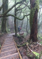 And then the steep downhill starts - this would have been tough without the aid of stairs.