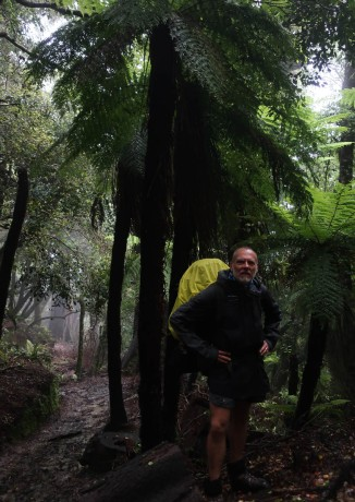 The beech and podocarp suddenly made way to include huge tree ferns.