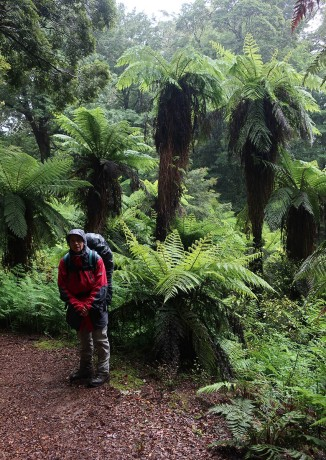 Massive tree ferns.