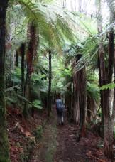 Still in tree fern valley.
