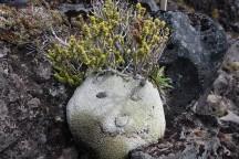 Someone had fun with the alpine vegetation.