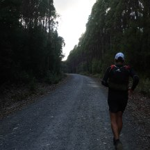 Back on a forestry road. The first 25kms were, for the most part, quite runnable.