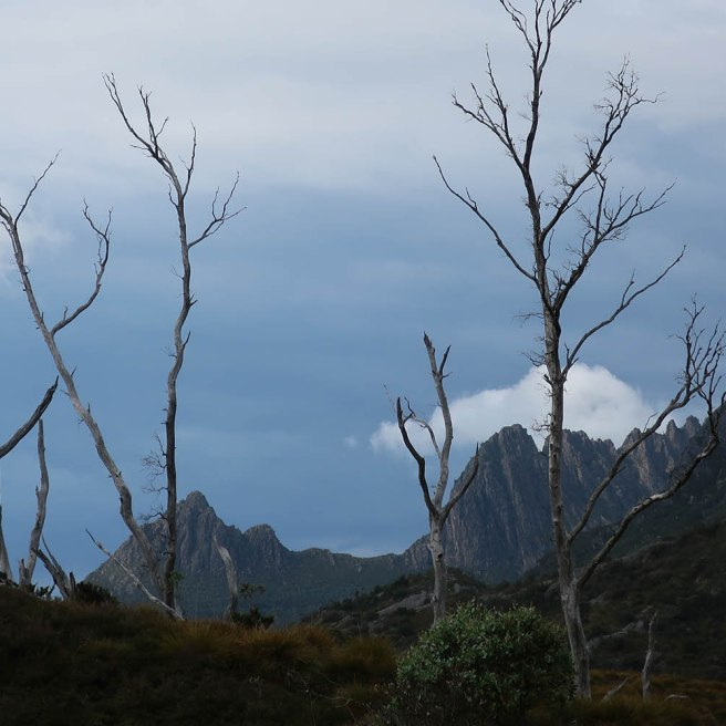 Little Horn (1355m), Weindorfers Tower leading up to Smithies Peak (1527m) and Cradle Mountain (1545m).