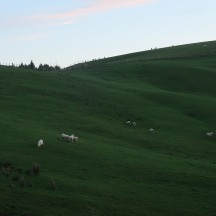 A typical early morning NZ landscape.