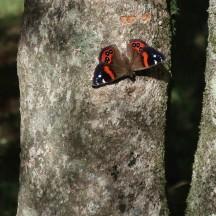 Some NZ wildlife.