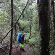 Between the beech trees.