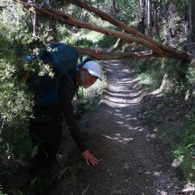 Fallen trees (manuka) make for a 15kg squat and deadlift, all in one!