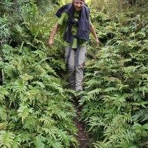 Dense vegetation along the lower tracks.