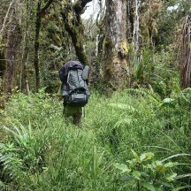 Super dense undergrowth makes it difficult to find the route in places.