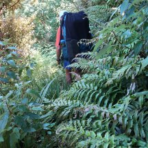Did I mention the dense undergrowth? :)