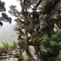Imposing vegetation.