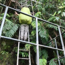 ... in this case a pretty standard Mitre 10 ladder bolted to the rocks.