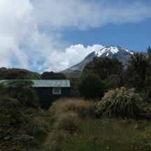 The tiny Kahui hut nestled between bushes.