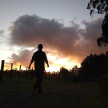 Sunset silhouette.